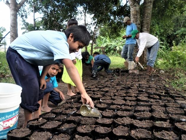 Indígenas Kariña crean viveros con plantas destinadas a reforestar zonas degradadas por la minería y la tala en la reserva forestal de la Sierra de Imataca en Venezuela.