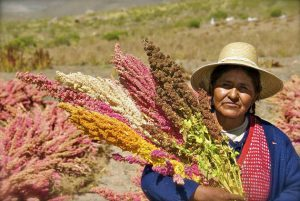 Una mujer en un campo de quinua. América Latina debe proteger y apoyar a sus mujeres rurales como parte del proyecto de recuperación de la región en la pandemia.