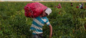 Niño trabajando en campo como muestra de la necesidad por la solidaridad mundial en la pandemia.
