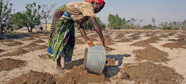 Sequías en África causadas por los fenómenos meteorológicos extremos amenazan la economía, la salud y la agricultura de todo el continente.