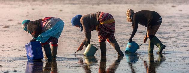 Un recurso fundamental contra el hambre serían los productos de la acuicultura.