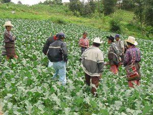 Fondo Verde para el Clima financia proyectos de Argentina, Guatemala y Sudán.