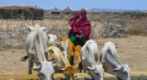 Además de la pandemia por covid-19, la violencia en Etiopía puede significar más sufrimiento y hambre para una población afectada por sequías, insuficiencia alimentaria, plagas, desplazamientos forzados y pobreza estructural.