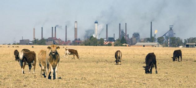 La industria, principalmente con el empleo de combustibles fósiles, y la ganadería sobre pastizales que reemplazan a los bosques, están entre las fuentes emisoras de gases de efecto invernadero que calientan el planeta. Foto: John Hogg/BM