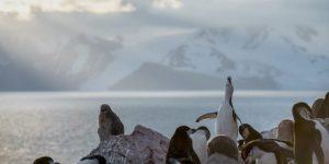 Pingüinos de barbijo fotografiados este año en la Antártida. Foto: Christian Åslund / Greenpeace