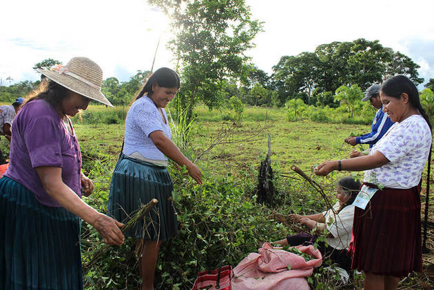 Campesinas bolivianas arrancan hojas coca en un predio recién erradicado. Foto: Pacifista!