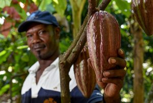Los nuevos proyectos buscan apoyar la conservación de la naturaleza y la siembra de árboles frutales y maderables junto a los cultivos tradicionales en Brasil, Chile, México, Nicaragua y Venezuela. Foto: FAO