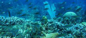 Los arrecifes de coral albergan 25 por ciento de la vida marina, especies que alimentan a 1000 millones de personas, y están en peligro de extinción si este siglo continúa avanzando el calentamiento global. Foto: Kadir van Lohuizen/Pnuma
