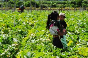 Una madre trabajadora con su hijo en un campo de Guatemala. El desempleo femenino sería de 22 por ciento en América Latina si se mantuvieran buscando trabajo las mujeres que deben dejar de laborar para dedicarse al cuidado de hogares y familia, según la Cepal. Foto: BM