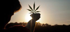 Vista de un campo de cáñamo, el género de plantas al que pertenece la marihuana y cuyas propiedades terapéuticas son reivindicadas por organismos del sistema de Naciones Unidas. Foto: David Gabric/Unsplash