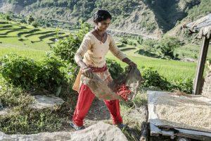 Una mujer campesina trabaja en una zona del montañoso Nepal. A pesar de que la agricultura es una actividad central en la vida de los habitantes de zonas rurales de montaña, más de 300 millones de ellos sufren insuficiencia alimentaria. Foto: Chris Steele-Perkins/FAO