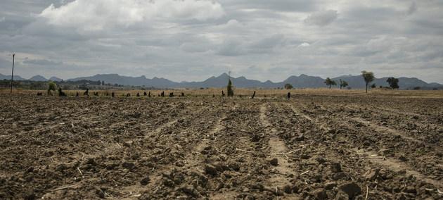 Paisaje de Zimbabwe, castigado por la sequía, en África austral, mientras al este del continente las inundaciones causaron muertes, destrozos y plagas. El calentamiento de este año impuso algunos récords y desató desastres en todo el globo. Foto: Mateo Cosorich/PMA