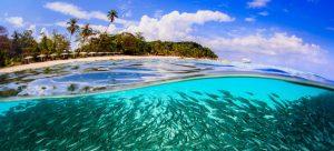Banco de peces frente a la isla Lang Tengah en Malasia. Para proteger ecosistemas terrestres y oceánicos, más de 50 países han lanzado un nuevo pacto ambiental, a desarrollar desde este 2021. Foto: Yen-Yi Lee/ONU