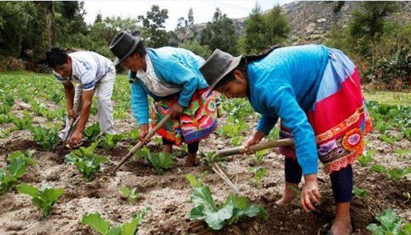 Abarcar con programas de protección laboral y social a los trabajadores rurales e informales es uno de los objetivos de la agenda de desarrollo inclusivo que adoptan los gobiernos latinoamericanos y caribeños. Foto: FAO