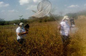 Agricultores, especialistas del Ministerio de Agricultura y soldados del Ejército participan en la detección de la langosta voladora, que amenaza con devastar cultivos en la cooperativa Los Chilamates, en el noroeste de El Salvador. Regiones de este país, de Guatemala y de México se encuentran en alerta por los brotes del insecto. Foto: Edgardo Ayala /IPS