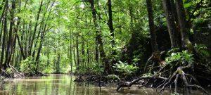 Los cinco países con los mayores bosques tropicales respaldan actividades, para apuntalar la recuperación económica tras la covid-19, que mantienen la deforestación y perjudican la vida de pueblos indígenas, según la oenegé Forest Peoples Programme. Foto: Pnuma