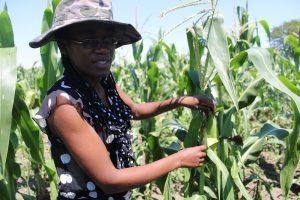 Jóvenes agricultores de Zimbabwe no pueden acceder a préstamos bancarios pese a poseer tierras y a que el gobierno promociona la agricultura como el instrumento para mejorar la seguridad alimentaria interna. Foto: Busani Bafana / IPS