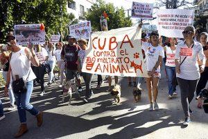 Protectores y criadores de mascotas marcharon en La Habana contra el maltrato animal y a favor de una ley que sancione el maltrato hacia los animales. La aprobación en Cuba del decreto-ley de Bienestar Animal el 26 de febrero fue en gran parte el resultado de la presión de los activistas por los derechos de los animales. Foto: Jorge Luis Baños/IPS