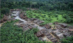 La deforestación, un problema ambiental de dimensiones globales, es sensiblemente menor en las áreas de la Amazonia que son reconocidas como territorios comunales de los pueblos indígenas. Foto: RAISG