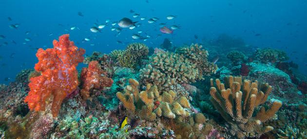 Los arrecifes de coral de las islas Fiji están amenazados por el calentamiento y el aumento de la acidez en el océano Pacífico. Foto: Jayne Jenk/Coral Reef Image Bank-ONU