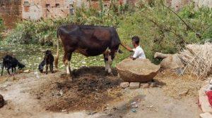 Un superviviente de trata de niños en Bihar, India. La extrema pobreza , el analfabetismo y las desigualdades socioeconómicas son los principales impulsores de la trata de niños para trabajos forzados o en régimen de servidumbre. Crédito: Neena Bhandari/IPS