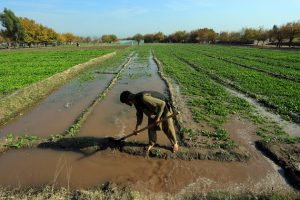 Los países en desarrollo y su población, como este agricultor de Afganistán, requieren el respaldo del Banco Mundial y el FMI para recuperarse de los impactos de la pandemia de covid. Foto: Banco Mundial