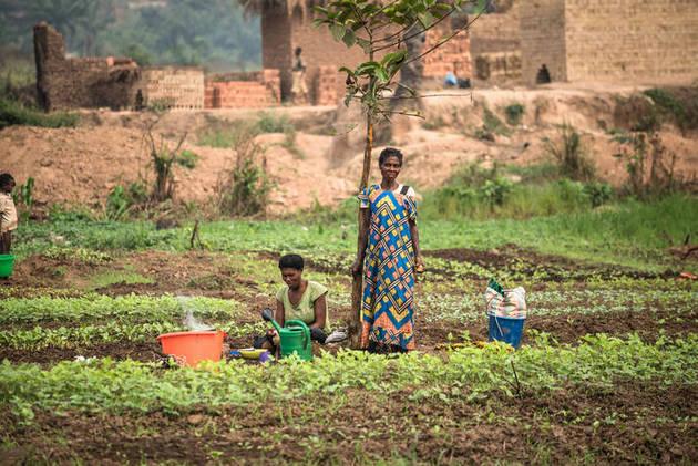 Familias de agricultores y pastores deben dejar siembras y animales cuando la violencia generada por grupos armados alcanza a sus comunidades en la República Democrática del Congo, generando una situación grave de insuficiencia alimentaria para millones de personas. Foto: FAO