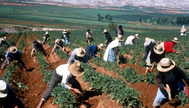 El descenso en la productividad agrícola afecta más a África y América Latina. En la imagen, campesinos andinos en plena cosecha. Foto: Zoraida Portillo / SciDevNet