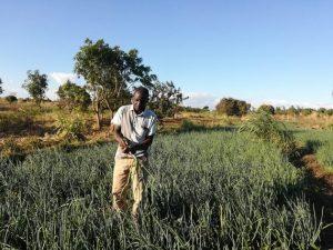 Jóvenes como Feston Zale, del área de Chileka, en la zona rural del distrito de Blantyre, de la Región del Sur de Malawi, están encontrando empleo e ingresos en la agroindustria. Foto: Esmie Komwa Eneya / IPS