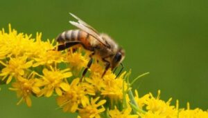 De acuerdo con un estudio realizado en Argentina, las principales amenazas contra las abejas melíferas incluyen pérdida de biodiversidad, plagas e impacto de agroquímicos usados en la agricultura intensiva. Foto: Michael Mueller/Flickr