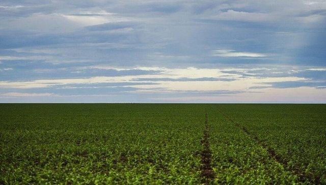 En Brasil, los principales productos agrícolas responsables de la deforestación son la carne vacuna y la soja. Las pasturas generaron 74 por ciento y la soja, 20 por ciento de la pérdida forestal. Foto: Marcelo Camargo/Agência Brasil
