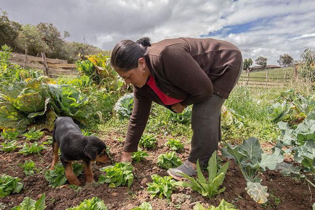Luz María Yumbo Quezada revisa sus cultivos en la comunidad de Bayán, en los Andes ecuatorianos. Foto: Pablo Carrasco / ONU Mujeres
