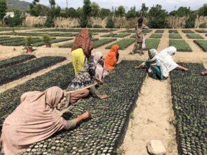 Mujeres que trabajan en guarderías estatales en Haripur, en la provincia de Jáiber Pastunjuá , en el noroeste de Pakistán. Este país asiático ha lanzado una de las iniciativas de reforestación más grandes del mundo: el Programa de los Diez Mil Millones de Árboles. Foto: Zofeen Ebrahim / IPS