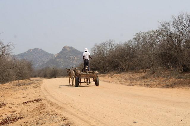 El carbón vegetal que se vende en los centros urbanos de Zimbabwe generalmente se importa ilegalmente de Mozambique y Zambia, productores tradicionales del combustible. Pero ahora se está produciendo ya en algunas provincias del país, según la Comisión Forestal. Foto: Busani Bafana/ IPS