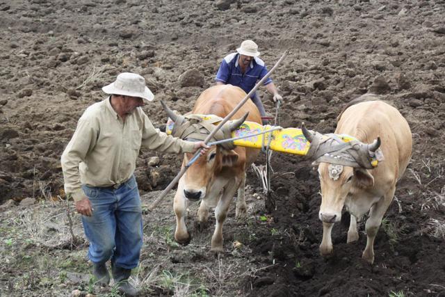 La agricultura y la ganadería son